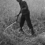 man with scythe and grass