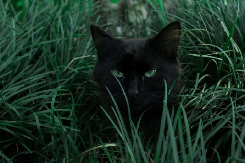 best cat deterrent lawn
